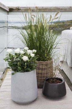 Det er fint å mikse forskjellige typer utepotter. Outdoor Pots, Outdoor Gardens, Balcony Garden, Garden Pots, Coastal Gardens, Flower Pots, Flowers, Garden Inspiration, Container Gardening