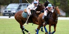 polo Local Attractions, Equestrian, Tourism, Polo, Horses, Activities, Animals, Turismo, Polos