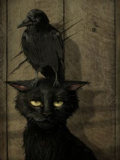 perched upon my cat's head yore...quoth the raven....