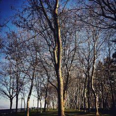 Súper invierno súper bosque en el parque. #trees #tree #park #wood #woods #love #instacity #city #ciudad #pamplona #navarra #europe #winter #cold #amazing #instagram #instagramers #instagood #instadaily #picture #picoftheday #pictures #pic