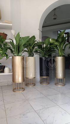Ficus Elastica, Apartment Balcony Decorating, Apartment Balconies, Calathea, Yucca, Decoration Plante, Pot Plante, Plant Decor, Lush