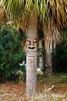 We have no clue as to who cut this face in this palm tree, but it has been a fixture on Cedar Key for at least 20 years! Tree Carving, Wood Carving, Land Art, Tahiti, Cedar Key Florida, Tiki Hut, Tiki Tiki, Hawaiian Homes, Tiki Room