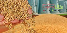 Equity And Commodity Market Tips: India`s Wheat, Pulses Output Seen Rising, To Curb ...