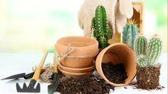 Plantera kaktus utomhus – 5 smarta tips