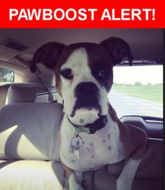 Please spread the word! Jerry was last seen in Cotulla, TX 78014.    Nearest Address: Los Angeles, Texas near Irvin Lease