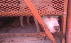 La Asociación Protectora de Animales de Coahuila denunció condiciones…