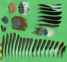 Chaffinch - Buchfink (Fringilla coelebs) -