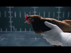 Part two, from Jaguar. Great ad, great response!  Jaguar vs. Chicken | Jaguar USA - YouTube