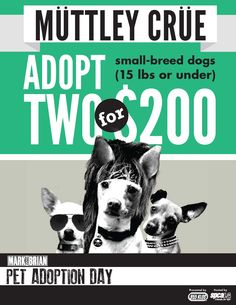 Muttley Cru: Adopt 2 small breed dogs for a reduced adoption fee!