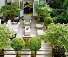 Designer Luciano Giubbilei's own London terrace garden - love the maple leaf trees