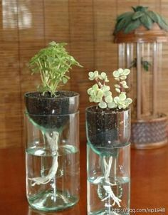 Recycle vase bouteille