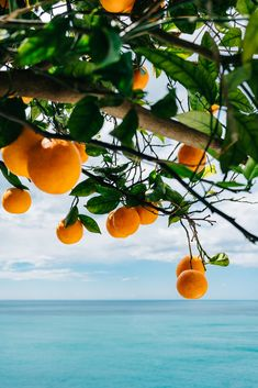 Amalfi Coast Oranges IV Art Print by Bethany Young Photography - X-Small Orange Aesthetic, Nature Aesthetic, Travel Aesthetic, Amalfi Coast, Summer Colors, Vintage Flowers, Aesthetic Pictures, Travel Photography, Around The Worlds
