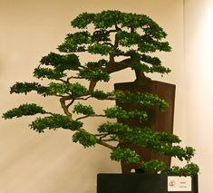 世界盆栽大会2009  - フォトエッセイ