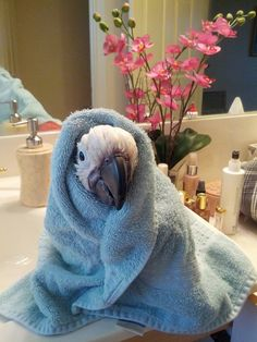 This is my cockatoo ....Boogie. He loves bath time!