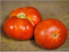 Pantano Romanesco Tomato