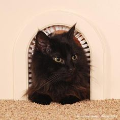 Furniture-Grade Baltic Birch Pet Door Cat Furniture ^^ Insider's special review you can't miss. Read more  : Furnitures that cats love