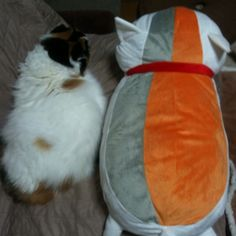 'Chibi' and 'NYANKO SENSEI' #cat #neko