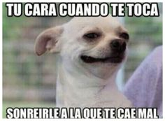 39 Ideas For Memes Chistosos Mexicanos Mexican Problems Hilarious Funny Spanish Memes, Spanish Humor, Animal Memes, Funny Animals, Animal Quotes, Mexican Problems, Mexican Memes, New Memes, Memes Humor