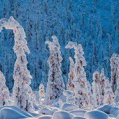 Abeti sotto la neve, #Norvegia