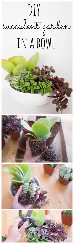 Super thorough & easy DIY succulent garden in a bowl, with tips on how to keep it alive!