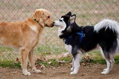 Science is learning all kinds of things about dogs' noses, including this: Humans are splendidly, amazingly stinky to dogs, and they love us for it.