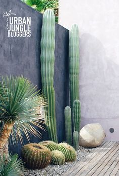Me encantan los cactus y sus formas. Son muy originales para decorar terrazas y jardines.