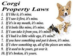 Corgie laws..... amendment to 10: ...& even then, sometimes its mine