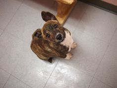 gypsy      D A P S Shelter Dogs, Animal Shelter, Animal Protection, Dog Pictures, Gypsy, Animals, Animal Shelters, Animales, Animaux