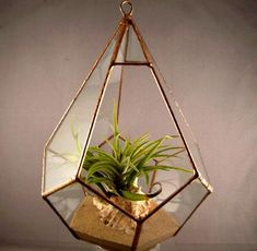 Diamond Terrarium Planters- The Wardian Case Company - Absolutely LOVE it!!