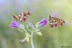 Two beauties by Siro Moya on 500px