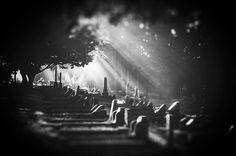 Visiting hours !   #hamilton #nz #cemetery #monochrome #middletonjoshua #nzphotographer #influencer #foggy #light #beam #grain #streetstyle #instadaily #instamood #bnwphotography #bnw_captures #bnwmood #bnw #nzimagery #lovethetron #pentaxk5 #sigma #benro #lowepro Light Beam, Cemetery, Hamilton, New Zealand, Monochrome, Instagram Posts, Monochrome Painting