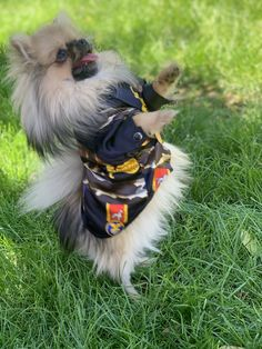 Teacup Pomeranian, All The Colors, Cute Animals, Colours, Pretty Animals, Cutest Animals, Cute Funny Animals, Adorable Animals