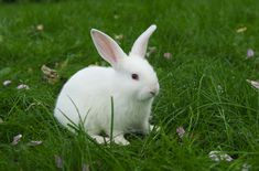 Florida White rabbits are wonderful pets for practically any stage of a person's life.