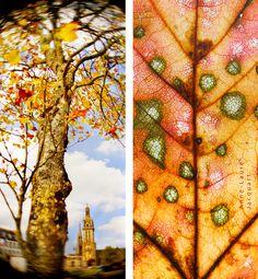 Inspiration saisonnière | Anne-Laure Jacquart