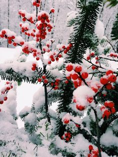 Winter Cozy — sugarplumsweety:   ❄ active holly jolly ❄