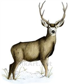 Pin Animal Deer Drawing Hipster Illustration Snow on Pinterest