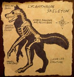 Lycanthrope Skeleton by Nashoba-Hostina.deviantart.com on @DeviantArt