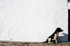 Dog -  Europe's West Coast by The West Coast of Europe. Portugal, via Flickr