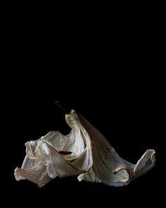 lily | STILL (mary jo hoffman)