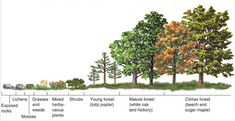 7.10.C Community Assembly; Ecological Succession; Primary Succession; Bare rock-Forest