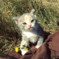 Raw Cat Feeding (Plus Cat Food Recipe)