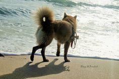 Chanell n'aime pas les vagues