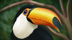 Image result for tucan