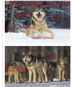The saga of Moon Moon, Wolf.  Oh, how I laughed