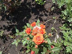 Цветочек в саду