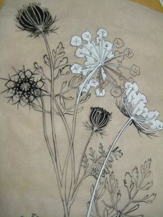 queen anne's lace- I love that this is on tracing paper or vellum because it is translucent. The contrast of light passing through the paper and the opaque white and black ink stopping it almost make it glow. I'm guessing this is ink and a gouache. I also love the natural subject being represented in such a graphic way. Very inspiring!