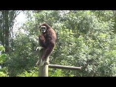 zoo en Normandie