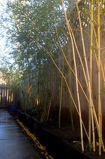 Of course! Bamboo grown in large rubbermaid bins :)  We can do the whole garden this way!