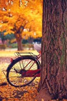 Take an Autumn bike ride with your family and appreciate the beautiful colors! Autumn Day, Autumn Leaves, Hello Autumn, Background Images For Editing, Picsart Background, Seasons Of The Year, Photo Backgrounds, Backgrounds Girly, Fall Season