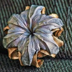 Expanded hollow point bullet - nice idea for metalwork Hollow Point, Guns And Ammo, The Expanse, Firearms, Hand Guns, Just In Case, Beautiful Flowers, Beautiful Images, Beautiful Things